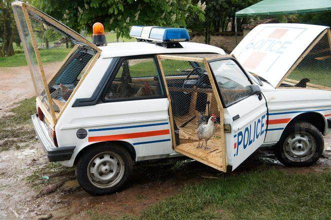 benedetto-bufalino-police-car-chicken-co