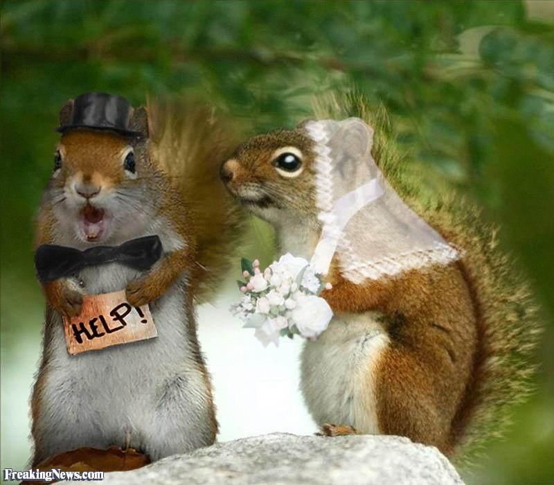 Fancy Squirrel Ring