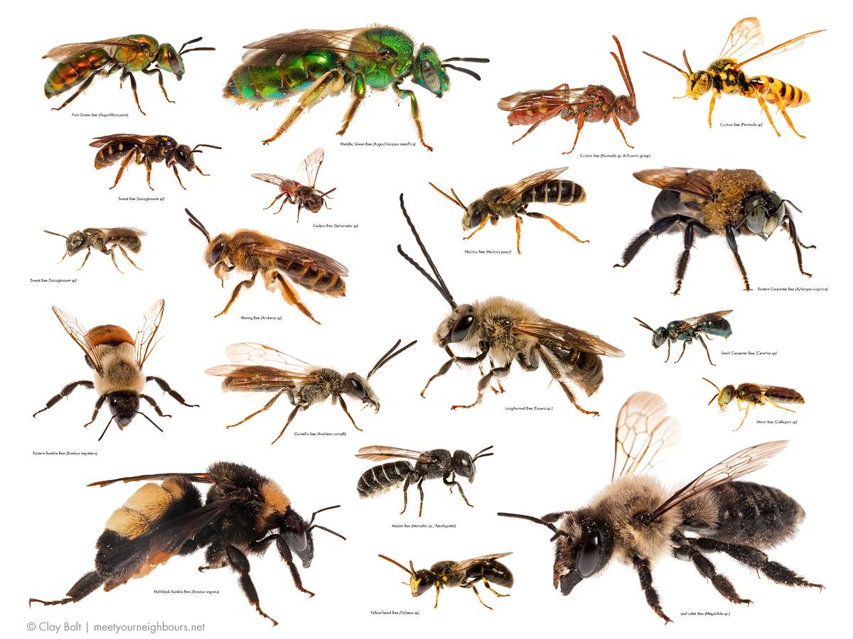 With bees, it's not how many, it's how many kinds ...