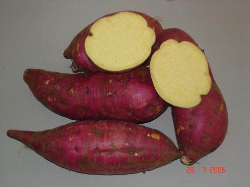 Variety Will Have A Purple Maroon Skin And White Cream Or Light Yellow Flesh That Has Fluffy Mushy Texture An Aroma Reminiscent Of Chestnuts