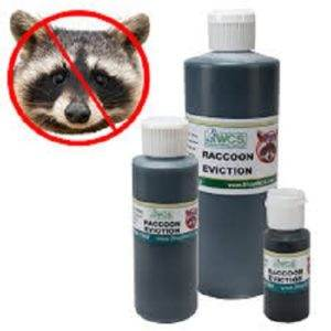 how to get rid of raccoon problems?? (predators forum at permies)
