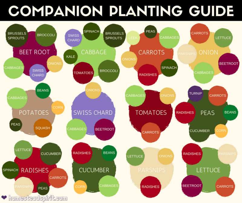 ... Companion Planting Charts Easily, So I Thought Iu0027d Paste All The Ones I  Was Finding Here, So Other People Would Have Them In One Easy To Find Place.