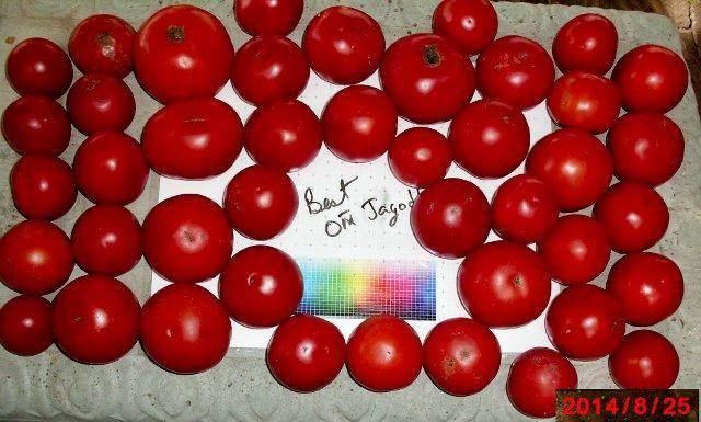 Jagodka Tomato