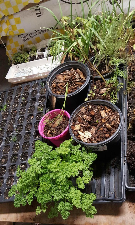 Killer Salad Plants Forum At Permies