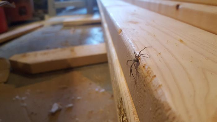 This spider caught my eye while I was cutting boards. The birds and insects are coming back to life, another sign Spring is nearning