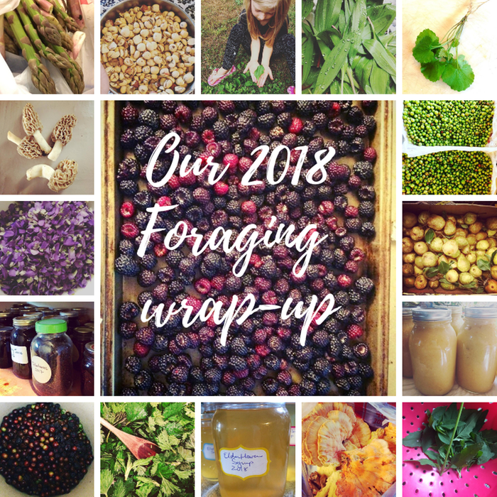 [Thumbnail for Our-2018-foraging-wrap-up.png]