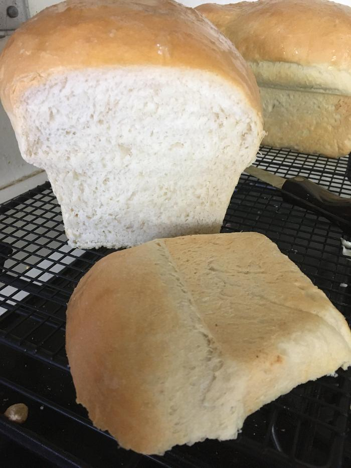 Julia Child White Sandwich Bread-Lucia's finished loaves
