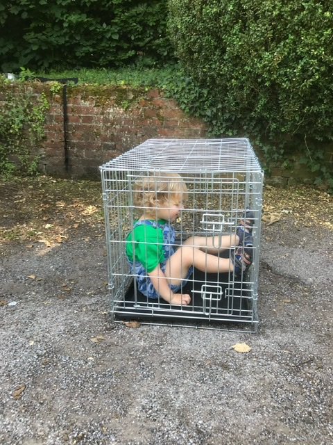 Dog box for sale, but by that time of the day we would have accepted offers on the child