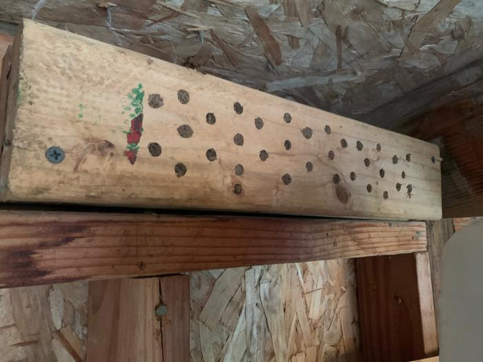 Mounted in my potting shed, full of mason bees!