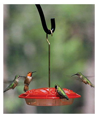 [Thumbnail for hummingbird-feeder.jpg]