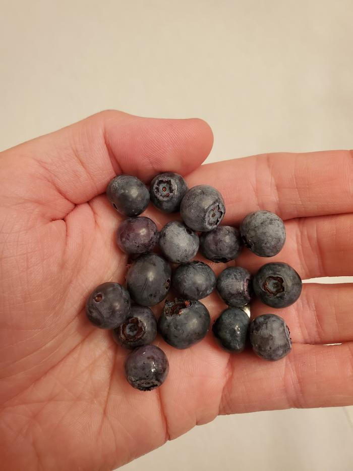 First blueberries of the year