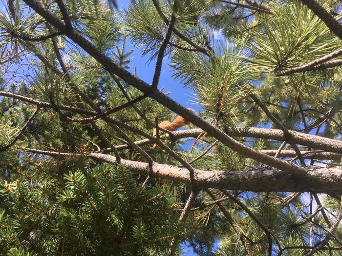 [Thumbnail for 463B7B6E-1974-42A5-BC18-919879CA331D.jpeg]