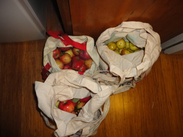 Here is a photo of the various bags of apples. I kept the apples from each tree in their own bag since they each have a different flavor.