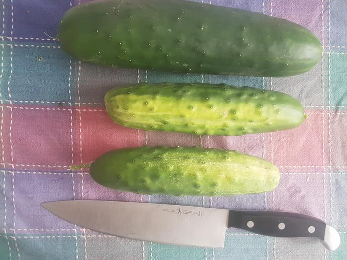 Monster Cucumbers!