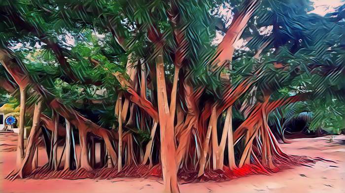 Banyon trees are awesome!