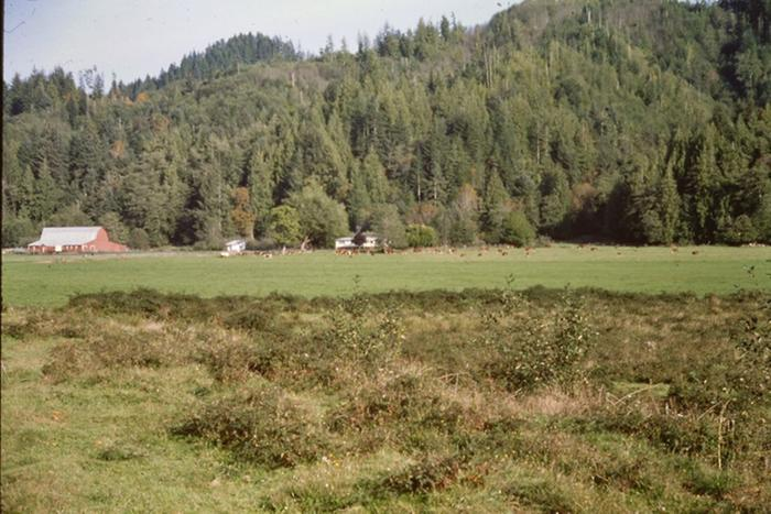 [Thumbnail for Site-of-Original-Haring-Barn-North-Fork-Siuslaw-Lane-County-Oregon.jpg]
