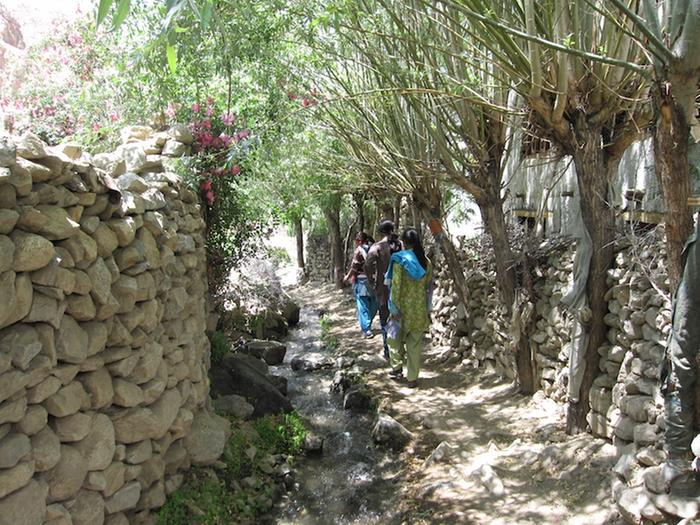 [Thumbnail for pollarded-willows-in-stone-walls-in-Ladakh-third-year.jpg]