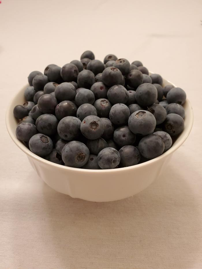 Freshly picked blueberries ready to be enjoyed