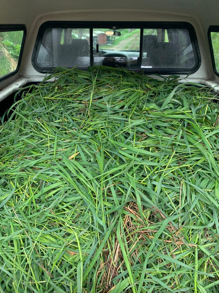 Filling up my truck with grass we scythed for mulch