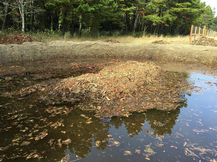 Vernal pool and wetland for runoff, with level sill to and through forest offscreen left