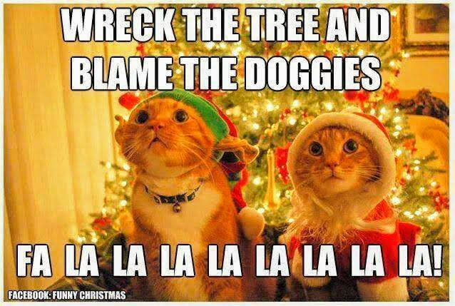 Merry Christmas All Pet Lovers Dogs And Cats Forum At Permies