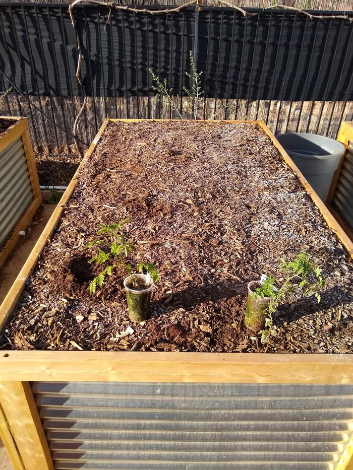 #5 Last bed filled, chunky style compost, will also have tomatoes like bed #4