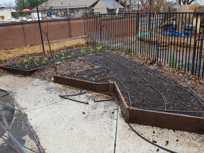 So here are the shallower beds with the mostly wood chips I made last year.