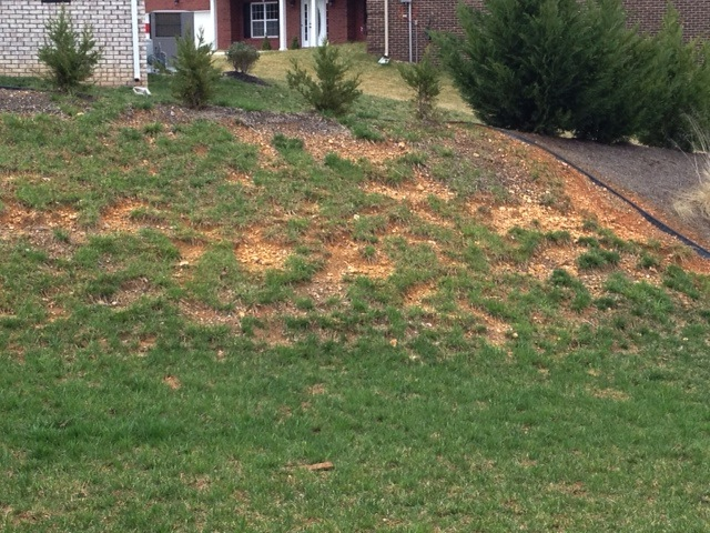 Any Suggestions On Getting Grass To Grow In Rocky Clay Soil Lawn