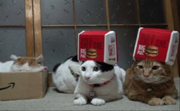 [Thumbnail for cats-love-boxes-3.jpg]