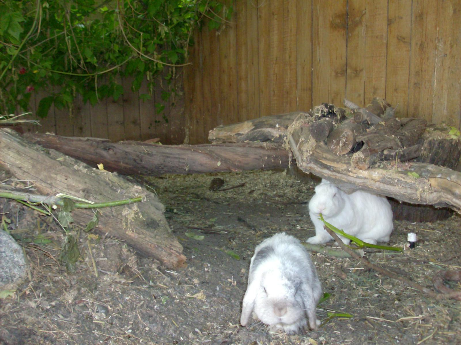 pastured rabbits experiences ideas rabbits forum at permies