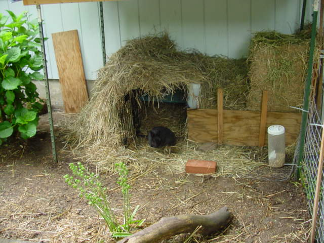 Pastured Rabbits Experiences Ideas rabbits Forum At