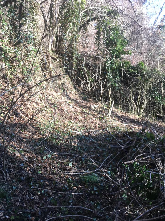 Blurry photo of one of the terraces inside the forrest. We've cleaned some of the dead wood and brambles but left any young trees that had sprouted, standing.
