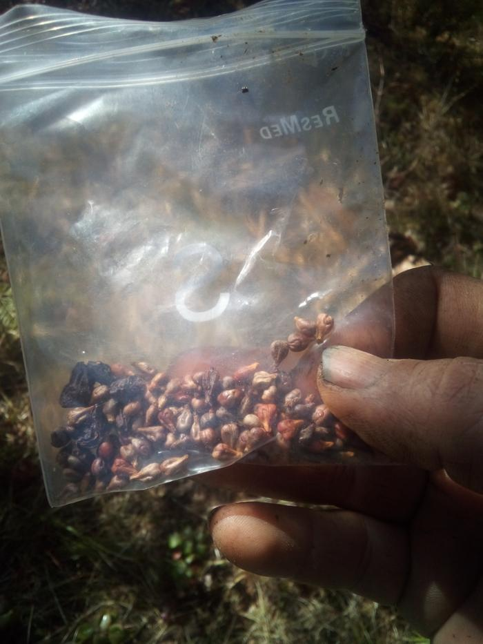 grape seeds from Tularosa
