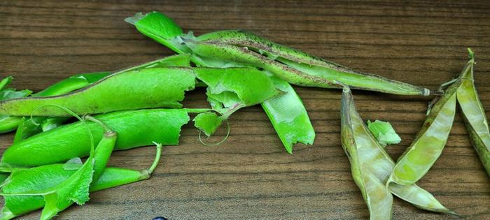 Runner pods with markings had the larger pink / blueish beans which are still drying. Bright green pods had pink runner beans inside. Far right were odd succotash beans.