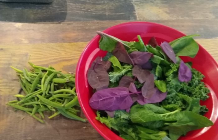Chard, kale, orach and green beans