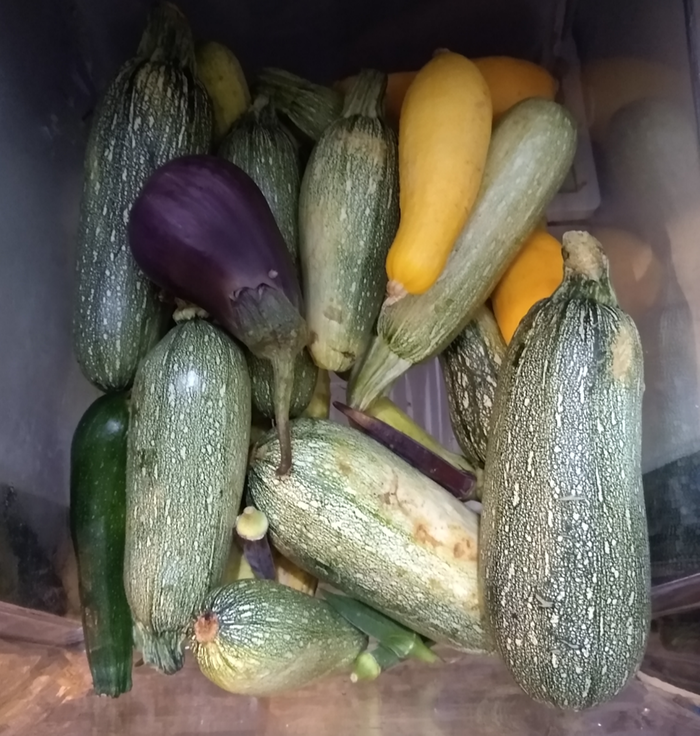 Zuccs, squash and an eggplant