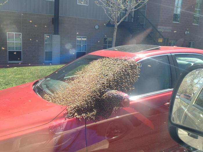 [Thumbnail for bee swarm.jpg]