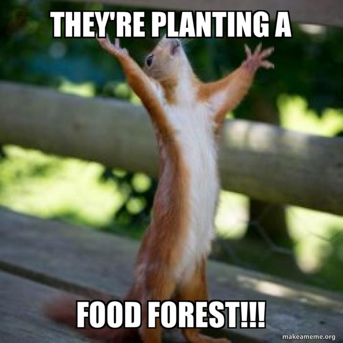 They're planting a food forest!