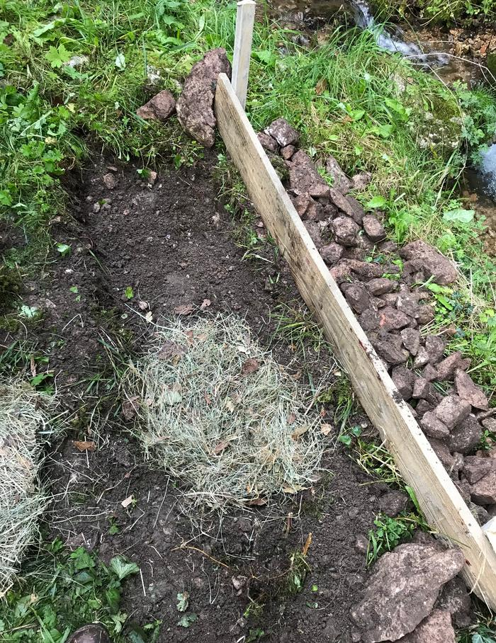 The second bed was dug about 20 cm below ground. A first thing layer of hay was spread into the hole