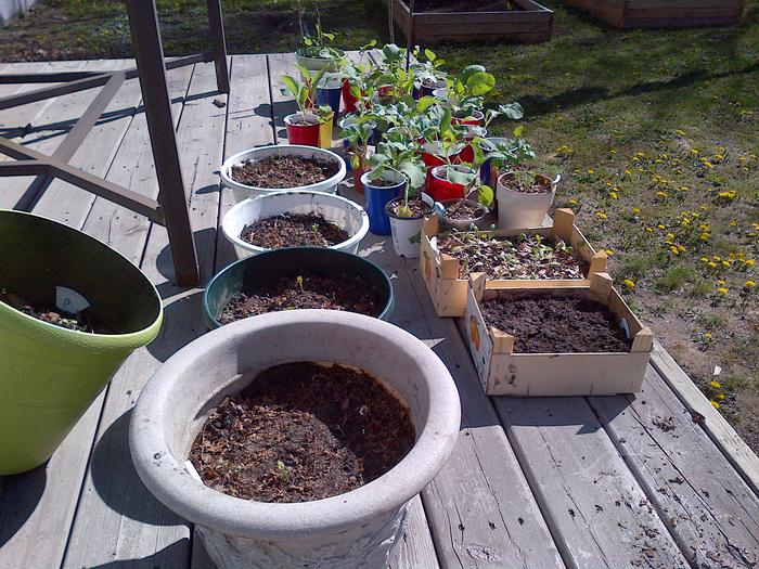 All the seedlings out for some sun
