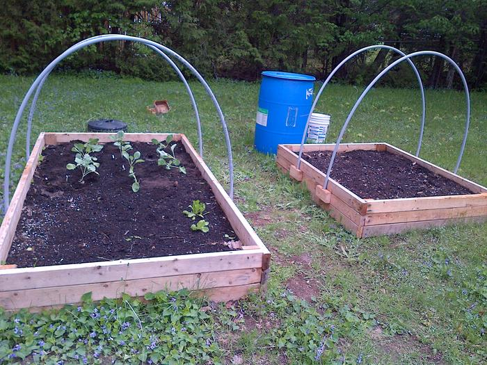 Two raised beds with transplants beginning
