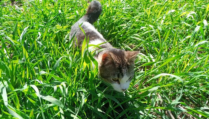 One of the farm cats in the grass