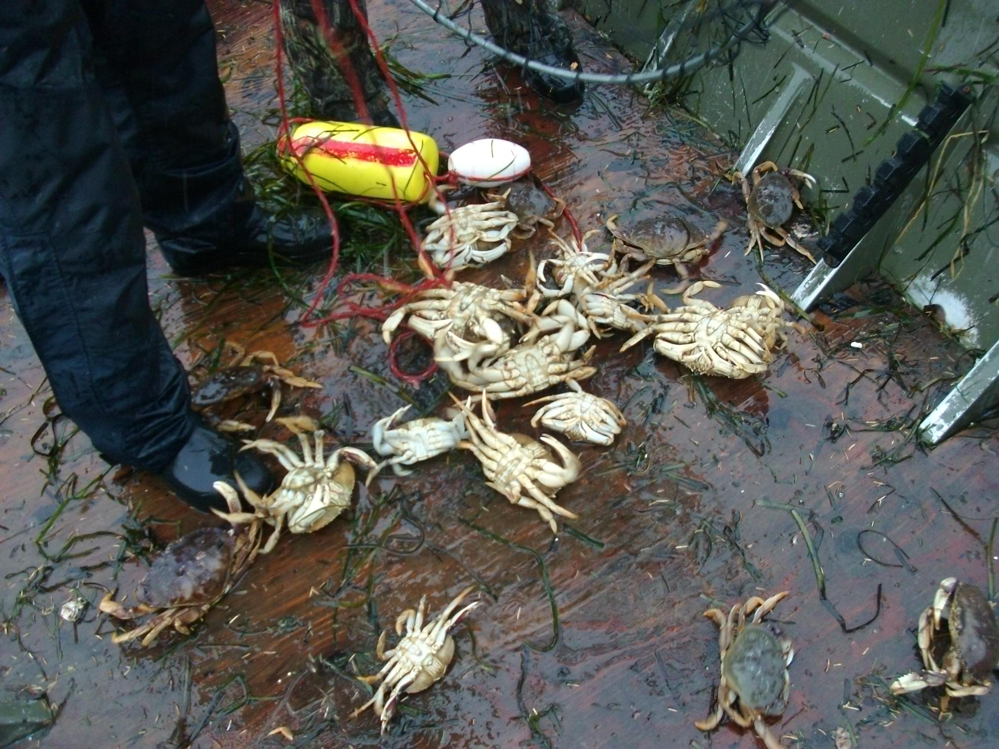 Crabbing on the oregon coast hunting and fishing forum at for Crab fishing oregon