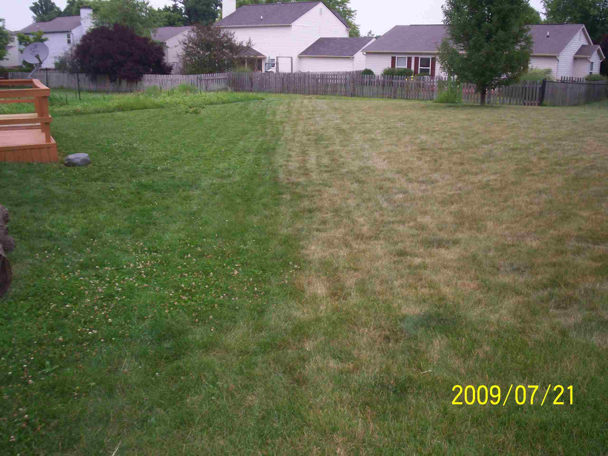 best way to overseed? lawn forum at permies, Natural flower