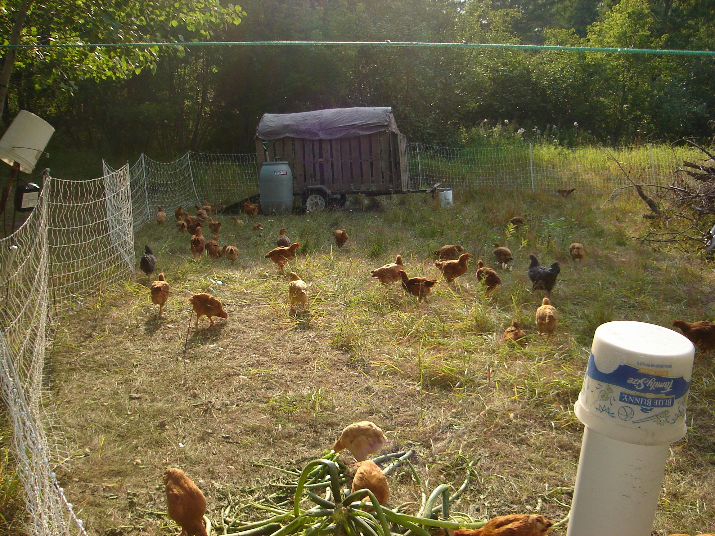 chicken coops/runs/tractors/paddocks/pens/etc. (chickens forum at ...