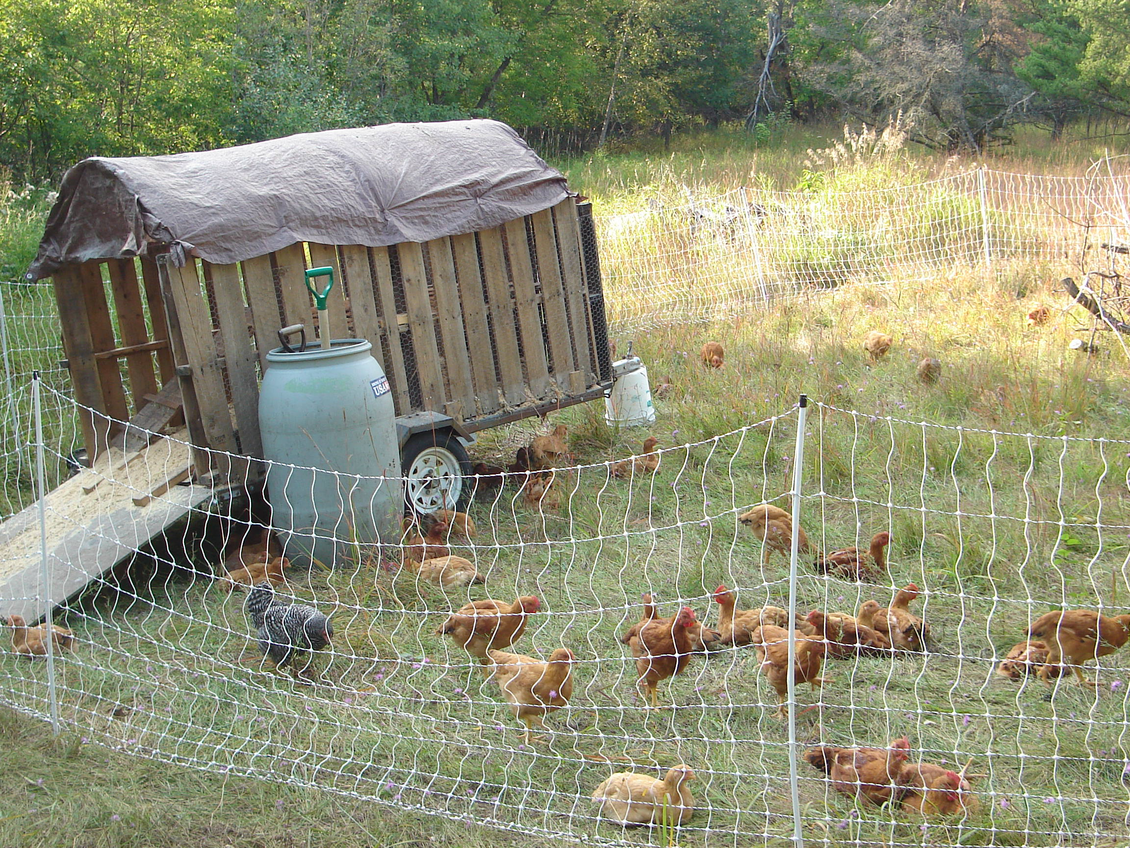 chicken coops/runs/tractors/paddocks/pens/etc. (chickens forum at