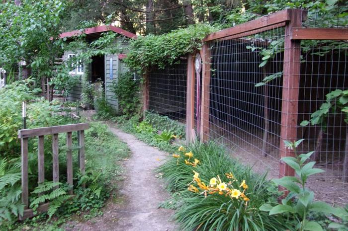Path to the chicken coop/potting shed
