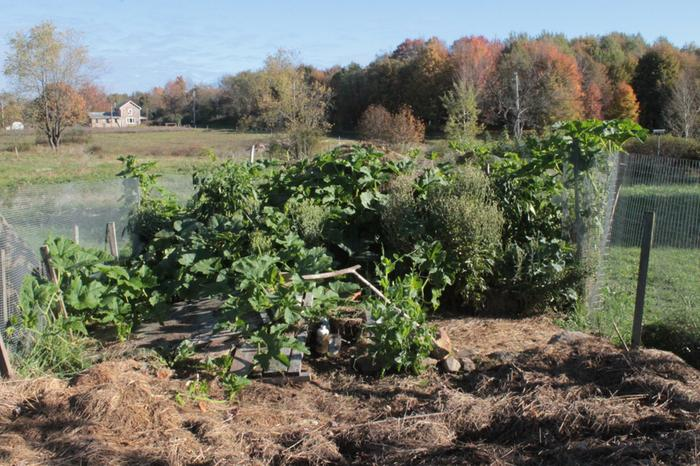 [Thumbnail for KeyholeGarden_2013-10-12_Pumkins-Watermelons_hanging in there (6).JPG]