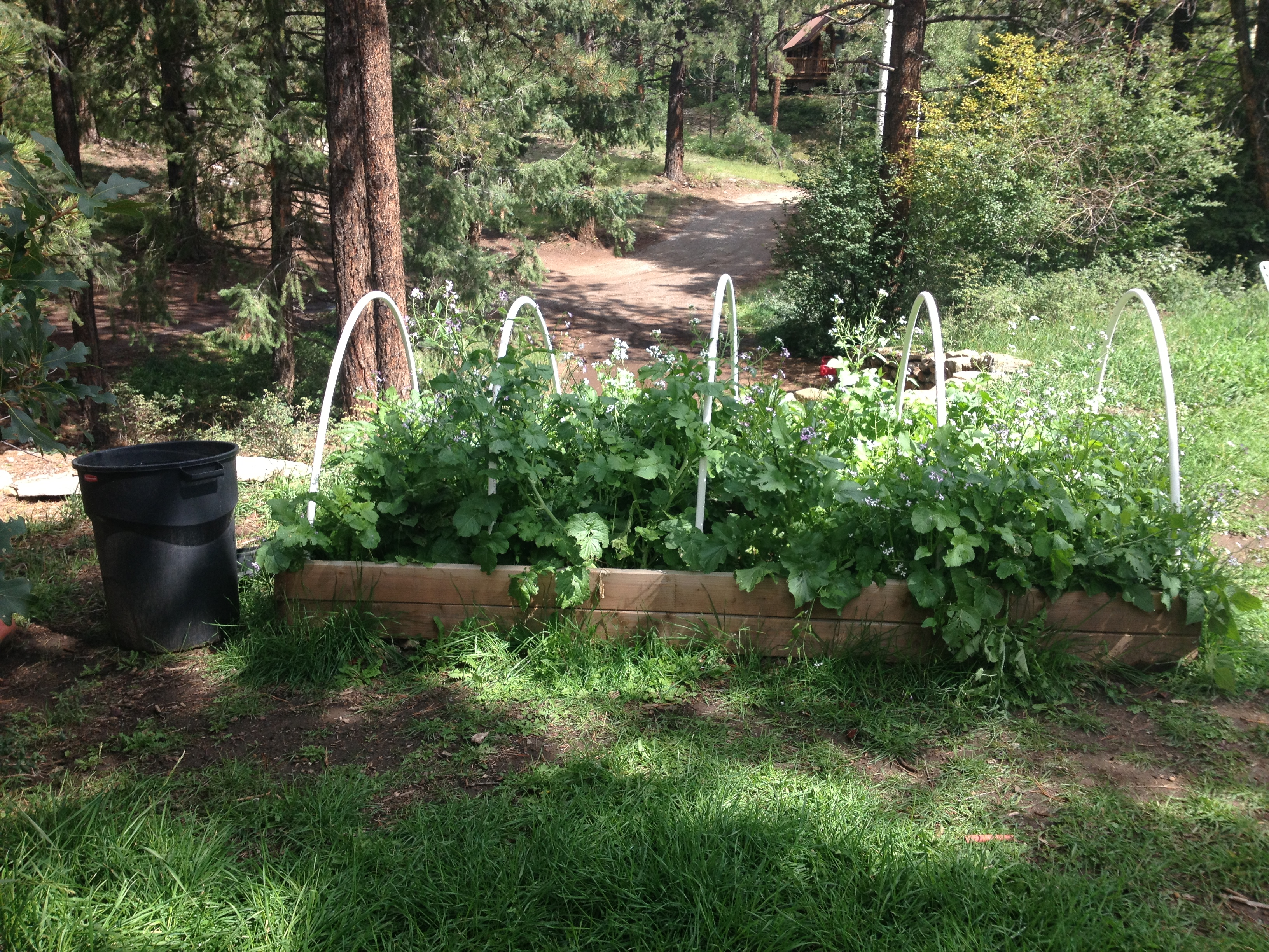 liquid fertilizer from weeds is this true composting forum at