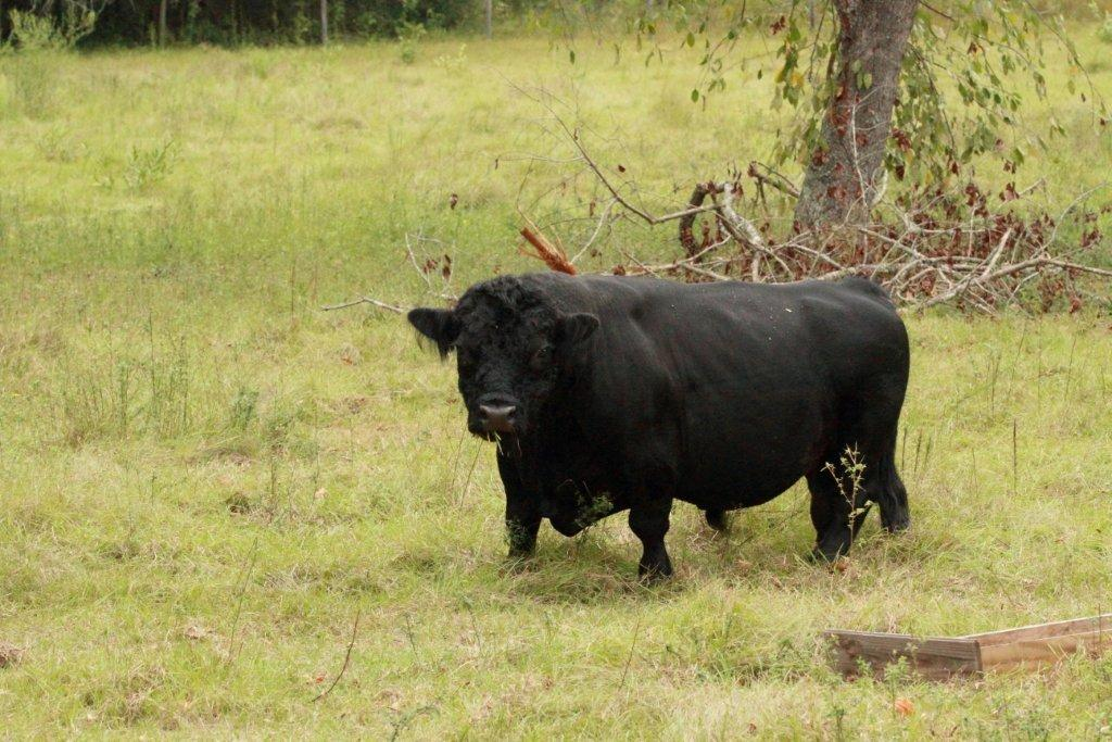 Pros and Cons of Miniature livestock (critter care forum at